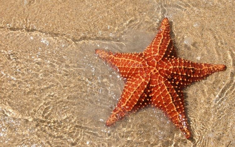 Starfish 9 Cool Facts About Starfish