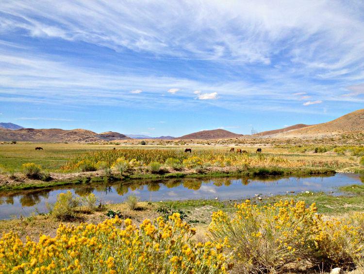 Steamboat Creek (Nevada) httpsuploadwikimediaorgwikipediacommonsbb