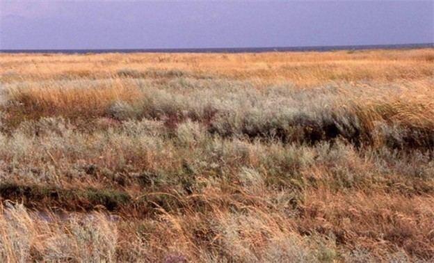 Steppe Steppe