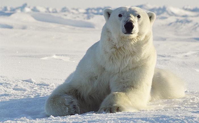 Steven Amstrup Introducing Dr Steven Amstrup Polar Bear Expert and 2014 Expo