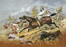 Stockman (Australia) httpsuploadwikimediaorgwikipediacommonsthu
