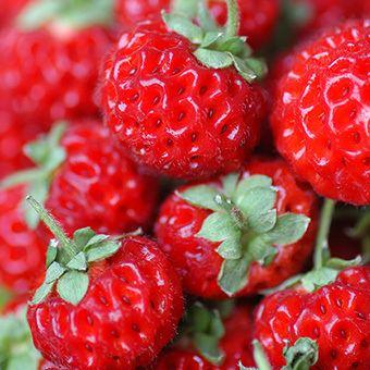 Strasberry Strawberry Strasberry 4 pack United Nurseries Pty Ltd