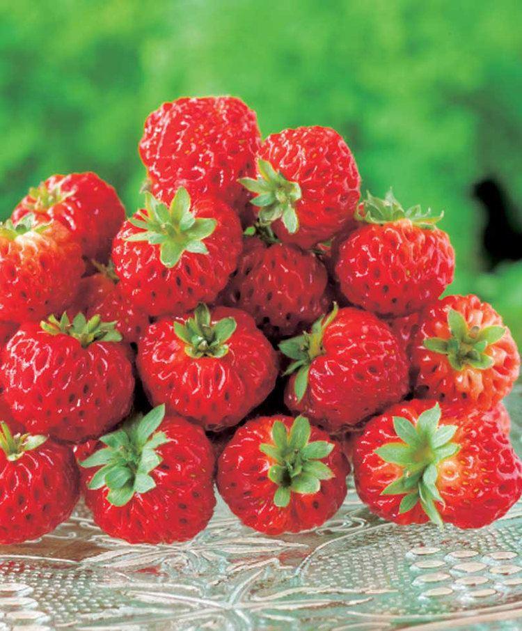Strasberry Strasberry39