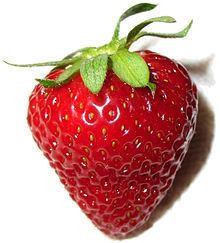 Strawberry httpsuploadwikimediaorgwikipediacommonsthu