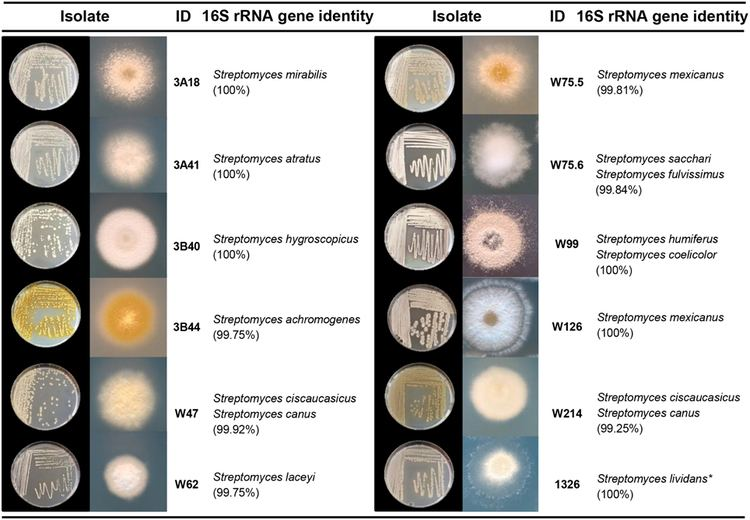 Streptomyces Frontiers Diversity and functions of volatile organic compounds
