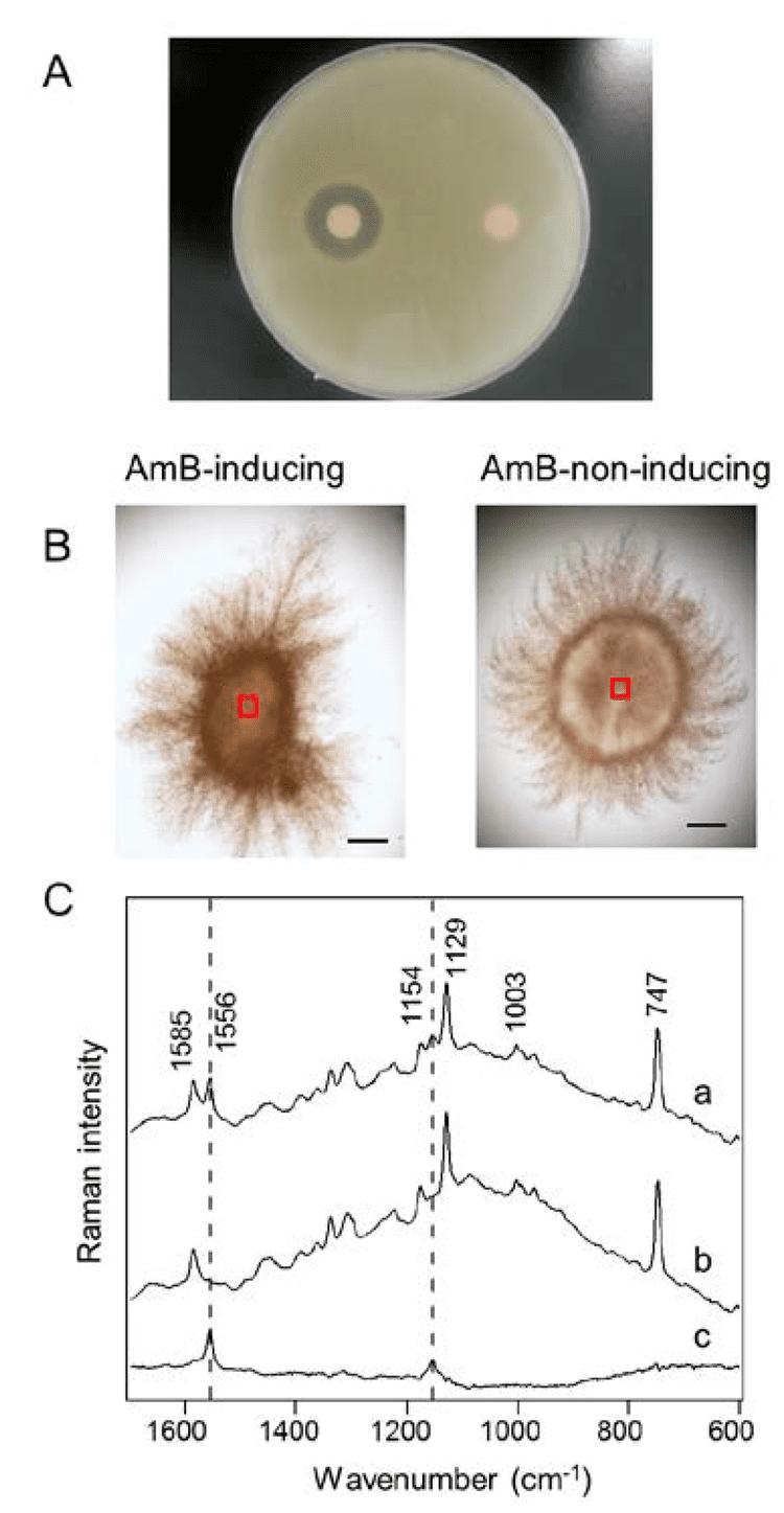 Streptomyces nodosus Marine Drugs Free FullText In Situ Detection of Antibiotic