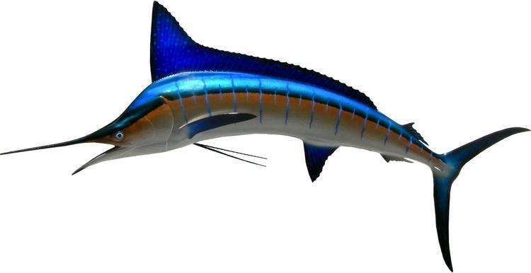 Striped marlin - Alchetron, The Free Social Encyclopedia