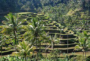 Subak (irrigation) httpsuploadwikimediaorgwikipediacommonsthu
