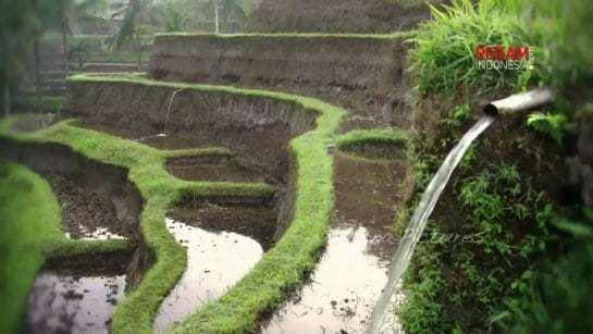 Subak (irrigation) Subak Bali Traditional Water Management System irrigation