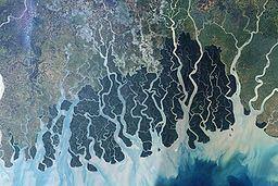 Sundarbans httpsuploadwikimediaorgwikipediacommonsthu