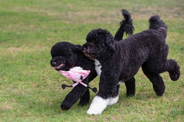 Sunny (dog) Hardly a dog39s life for two pooches named Sunny NY Daily News