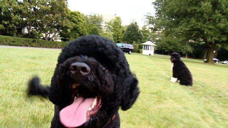 Sunny (dog) Introducing the Newest Obama Sunny YouTube