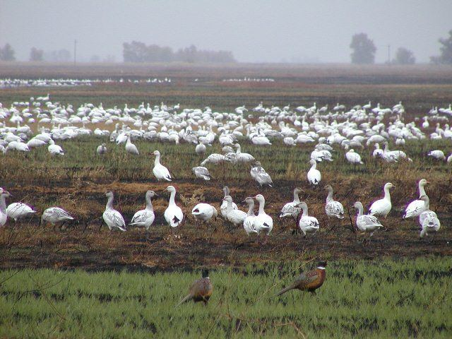 Sutter National Wildlife Refuge