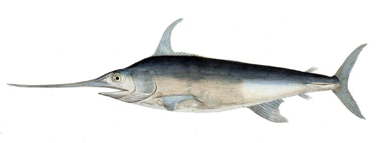 Swordfish Swordfish Wikipedia