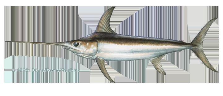 Swordfish swordfishpng