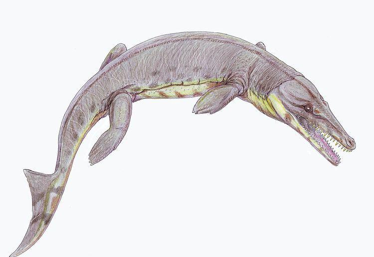 Symptosuchus