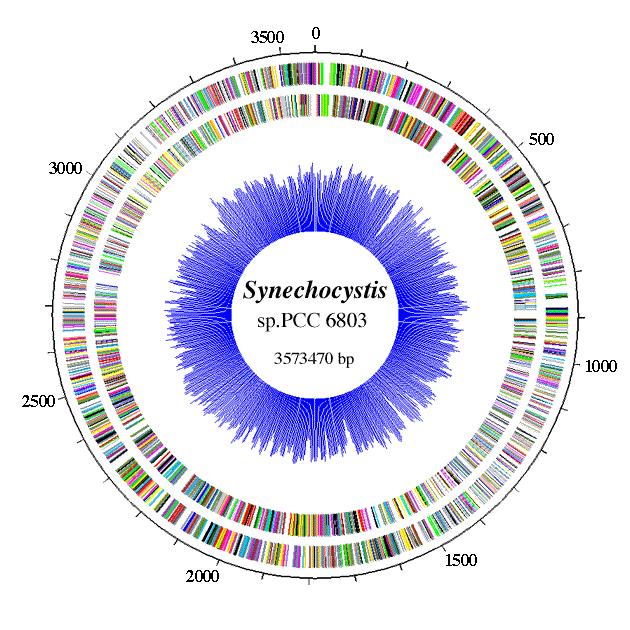 Synechocystis cyanobaseSynechocystis Top