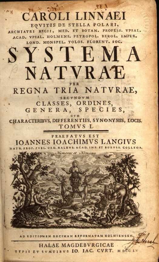 10th edition of systema naturae wikiwand.