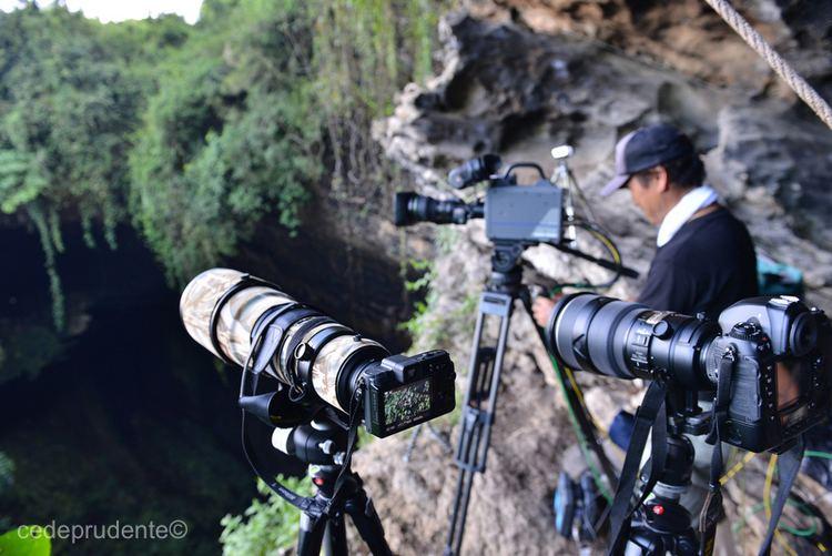 Tadashi Shimada Tadashi Shimada and NHKs Wildlife Films in Sabah Borneo Borneo