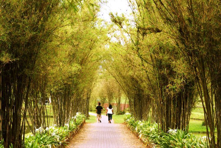 Taiping, Perak Beautiful Landscapes of Taiping, Perak