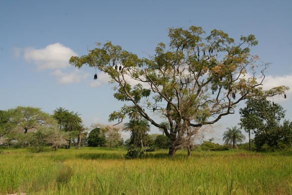 Tambacounda Region Beautiful Landscapes of Tambacounda Region