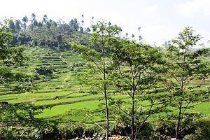 Tasikmalaya Regency httpsuploadwikimediaorgwikipediacommonsthu