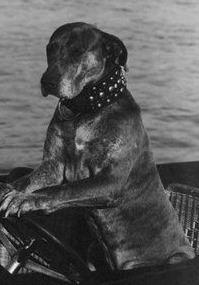 Teddy (dog)