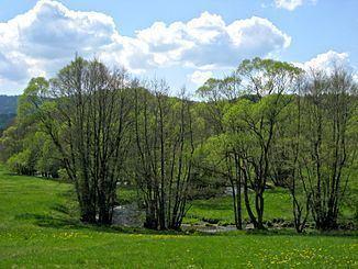 Teisnach (river) httpsuploadwikimediaorgwikipediacommonsthu