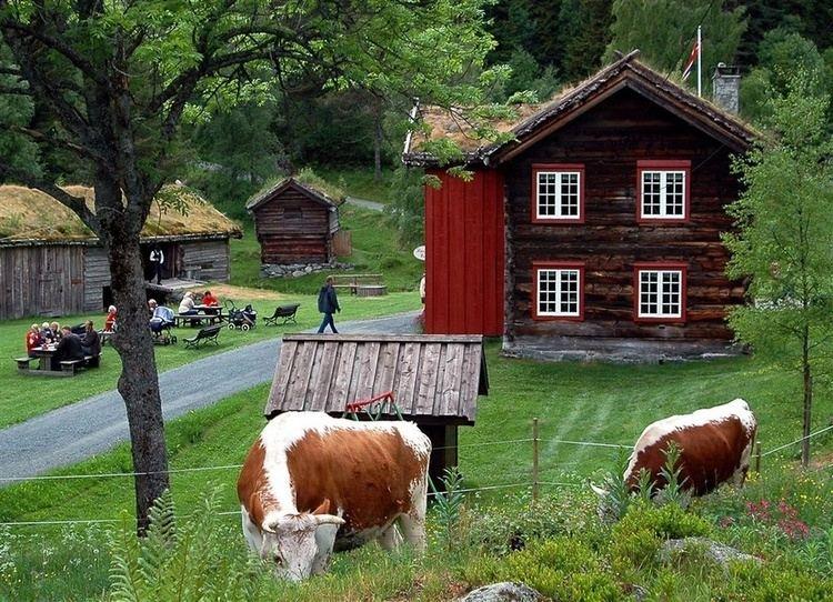 Telemark cattle Telemark cattle Telemark Heritage amp genealogy site Vest