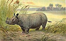 Teleoceras Teleoceras Wikipedia