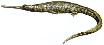 Teleosaurus Teleosaurus Siamotyranv blog