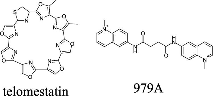 Telomestatin Interaction of Telomestatin with the Telomeric Singlestrand Overhang
