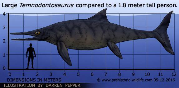 Výsledek obrázku pro Temnodontosaurus