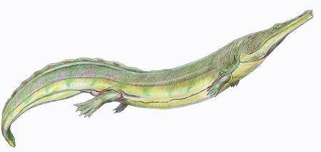 Temnospondyli Palaeos Vertebrates Temnospondyli Trematosauridae