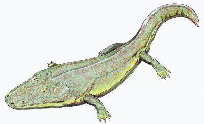 Temnospondyli Palaeos Vertebrates Temnospondyli