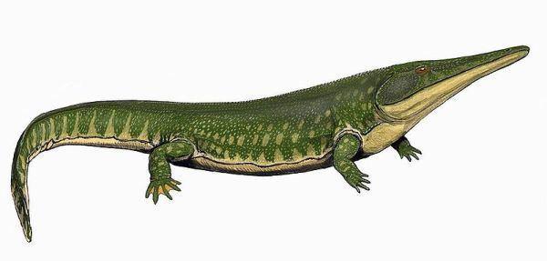 Temnospondyli palaeoscomvertebratestemnospondyliimagesArche