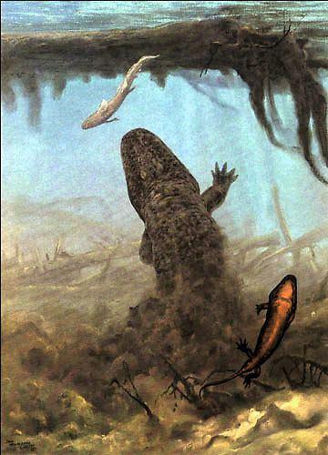 Temnospondyli Temnospondyli