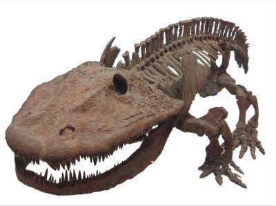 Temnospondyli Palaeos Vertebrates Temnospondyli Eryopoidea