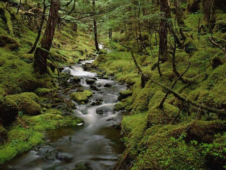 Temperate forest Temperate Forest Fernando ThingLink