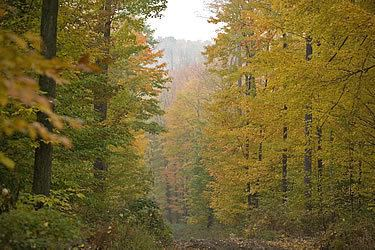 Temperate forest Interholco Temperate Forests