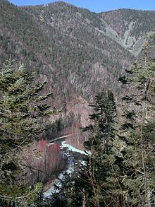 Temperate rainforests of the Russian Far East httpsuploadwikimediaorgwikipediacommonsthu