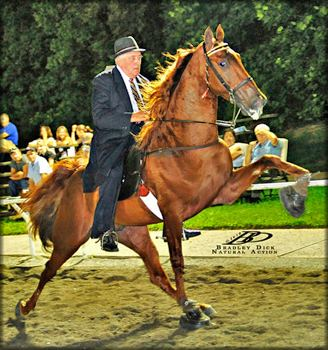 Tennessee Walking Horse Tennessee Walking horse THE COACH 20401847 home page by Walkers
