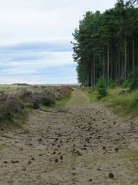 Tentsmuir Forest Tentsmuir Forest Wikipedia
