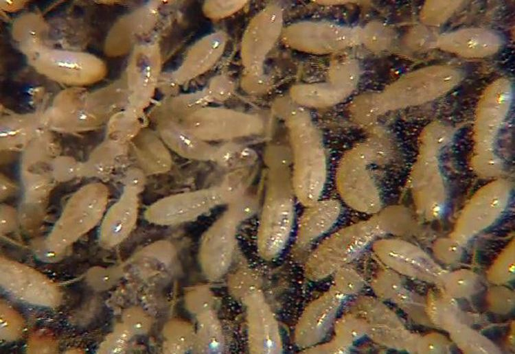 Termite Termites Types Facts amp How to Identify Them