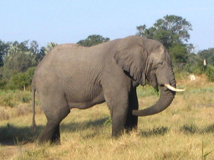 Terrestrial animal Top 10 Heaviest Land Animals On The Earth
