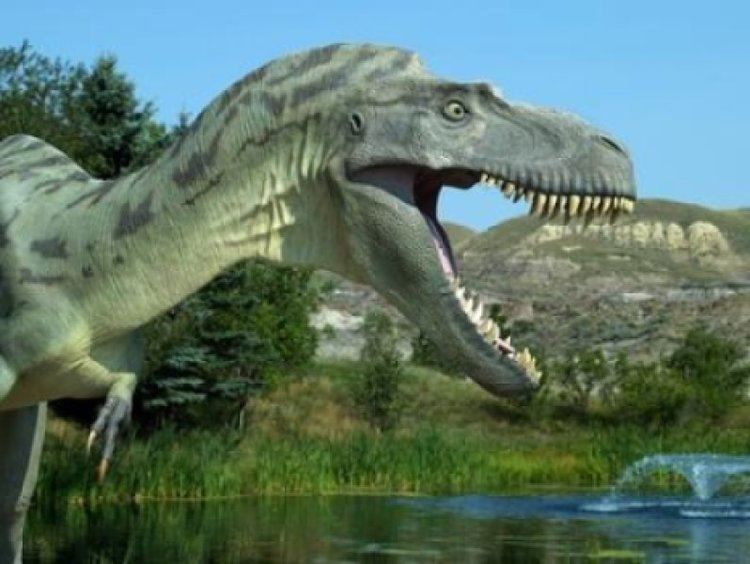 Terrestrial animal T rex has most powerful bite of any terrestrial animal ever