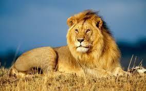 Terrestrial animal Terrestrial Animals and Their Adaptational Characteristics kullabscom