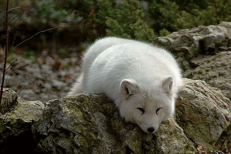 Terrestrial animal You39re Getting Colder How Terrestrial Animals Survive in Very