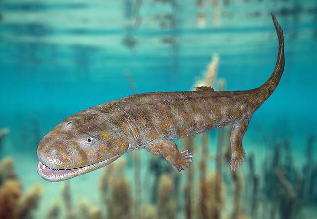 Tetrapod Palaeos Vertebrates Tetrapoda Overview