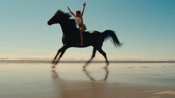 The Black Stallion (film) The Black Stallion Nirvana on Horseback From the Current The